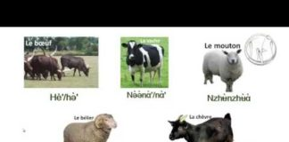 cours nufi – animaux